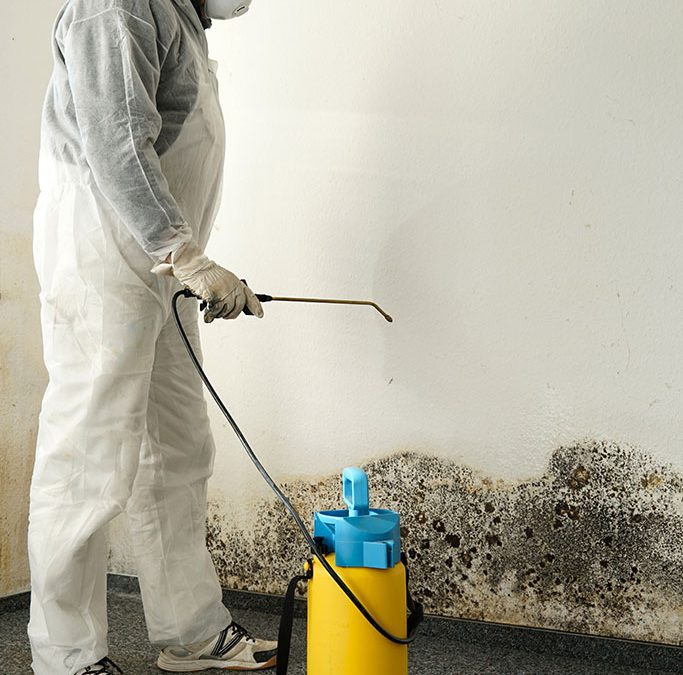 What to Expect from a Black Mold Removal Company